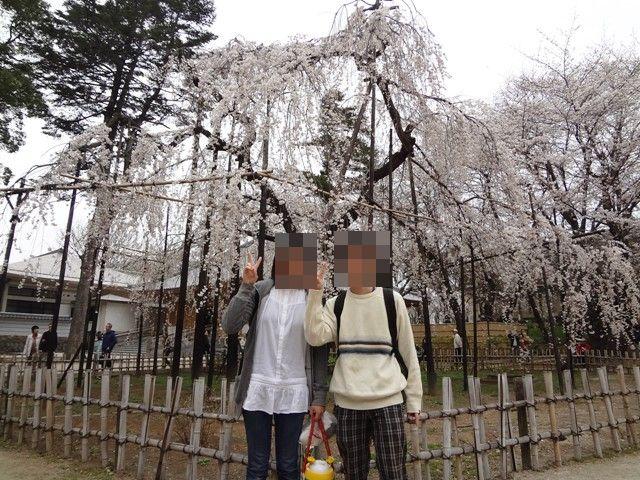 伏姫桜の前でお写真1