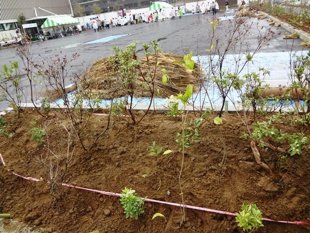 イオンタウンの植木(3)
