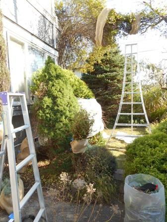 my-garden 019 (4)