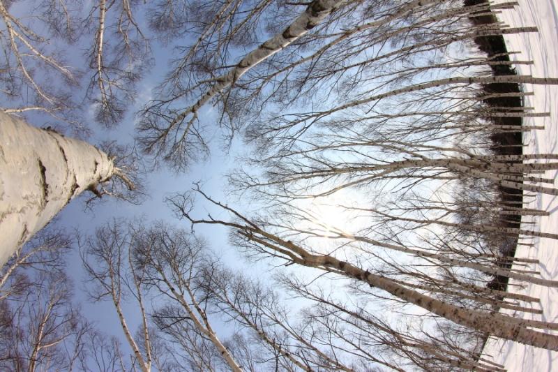 コピー ~ 130317-前田森林公園104
