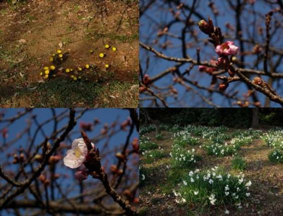 見つけた春たち