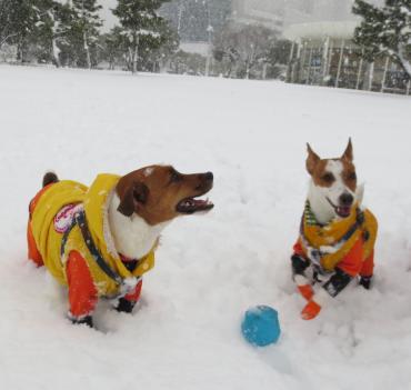 2013_1_14_大雪3