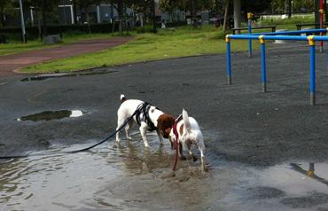 水溜り遊び1