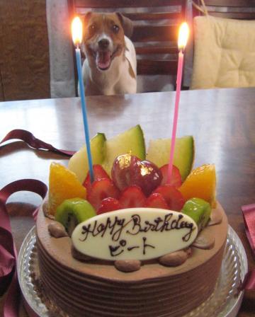 2012_5_ピート誕生日ケーキ2