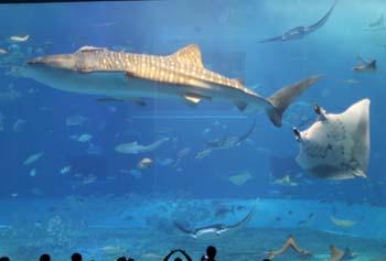 2013_4_6_美ら海水族館1