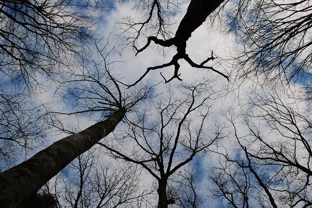 巨木観察 3