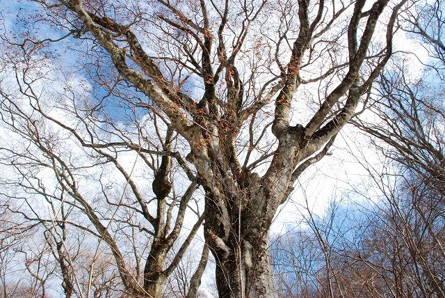 巨木観察17