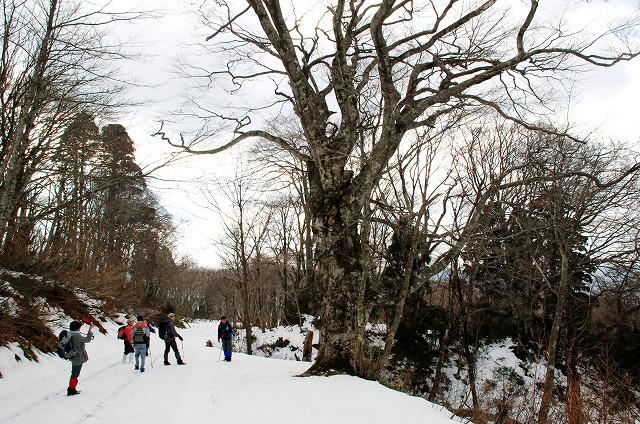 巨木観察 21