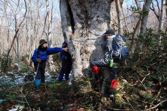 巨木観察 23
