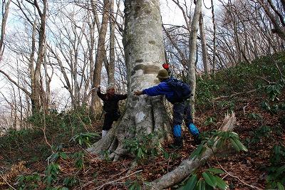 巨木観察 24