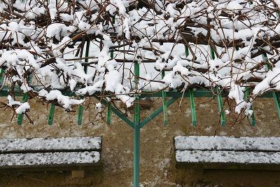 雪の朝 5