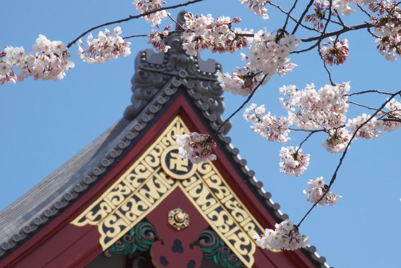 【PhotoTable】桜と浅草