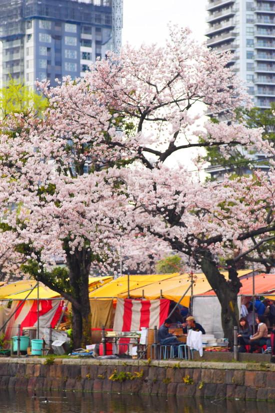 【PhotoTable】桜と上野