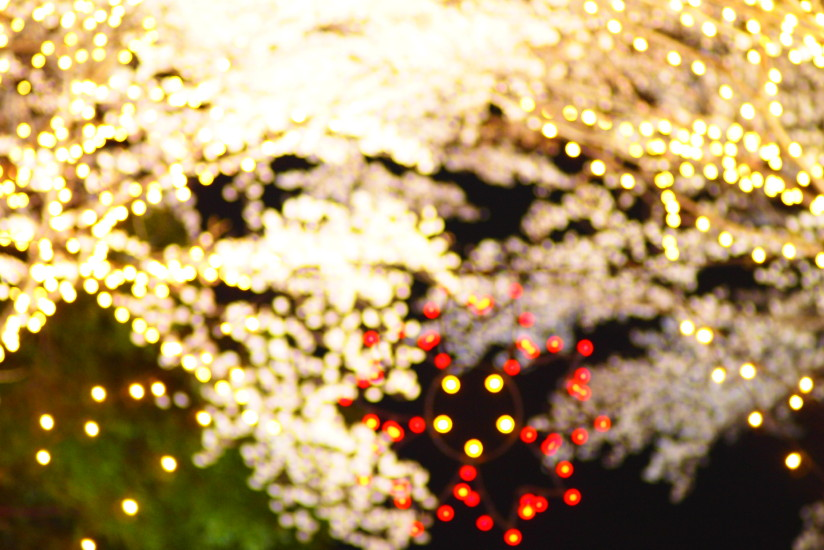 【PhotoTable】珠玉(東京の桜を撮る)