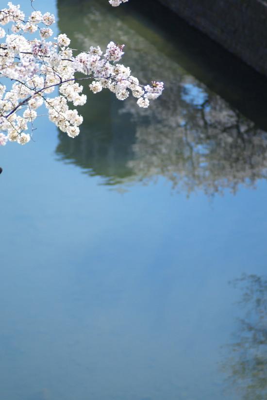【PhotoTable】淵と桜(東京の桜を撮る)