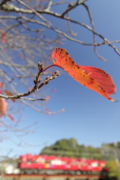 2014/11/15 和歌山電鐵貴志川線 大池遊園