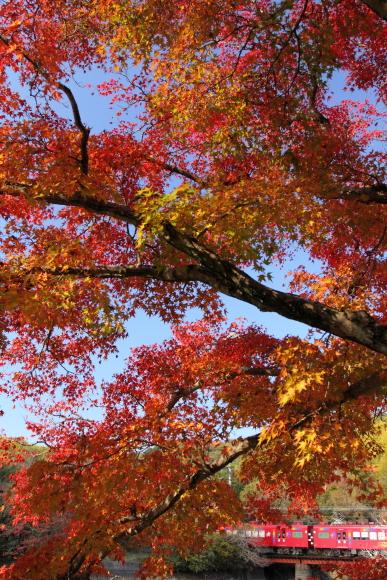 2014/11/23 和歌山電鐵貴志川線 大池遊園