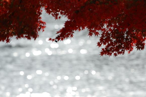 2014/11/28 和歌山電鐵貴志川線 大池遊園