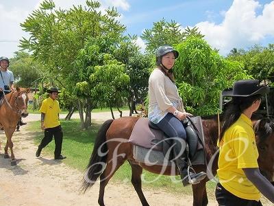 しまかぜ案内人と乗馬体験ツアーオプショナルスパ観光