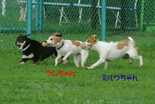 035a_20120811205321.jpg