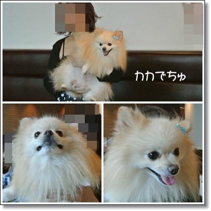 cats11_20121014125338.jpg