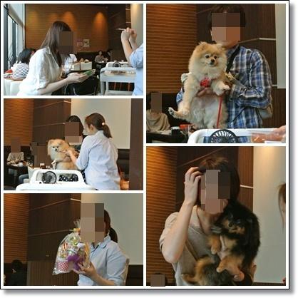 cats13_20121014191815.jpg