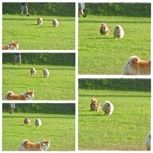 cats1_20120804201215.jpg