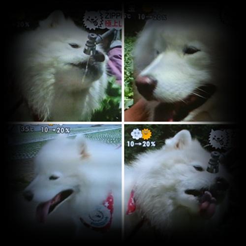 cats1_20120817192822.jpg