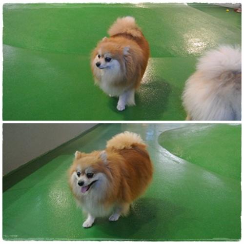 cats1_20120822162909.jpg
