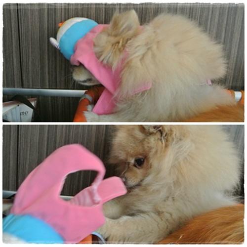 cats2_20120901191453.jpg