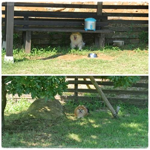 cats3_20120825172627.jpg