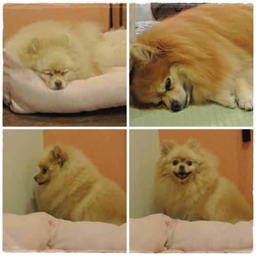 cats3_20120825181802.jpg