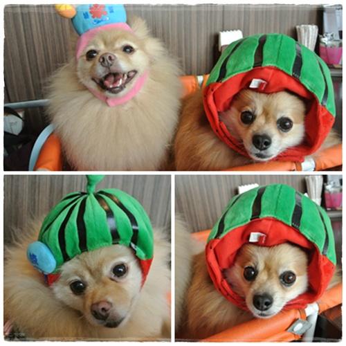 cats3_20120901191452.jpg