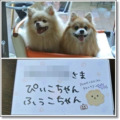 cats3_20121013225911.jpg