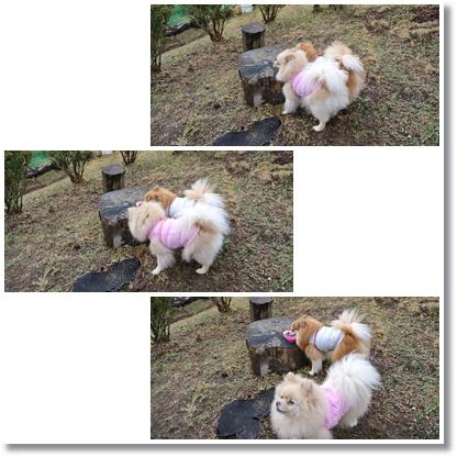 cats5_20121125192038.jpg