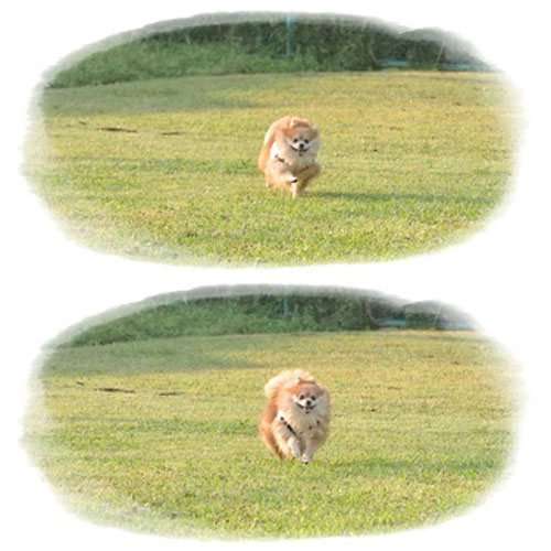 cats6_20121006191726.jpg