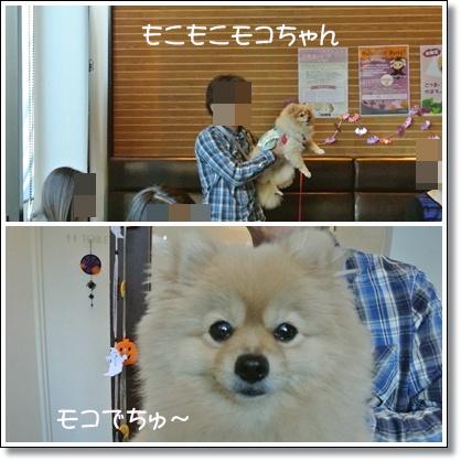 cats7_20121014125340.jpg
