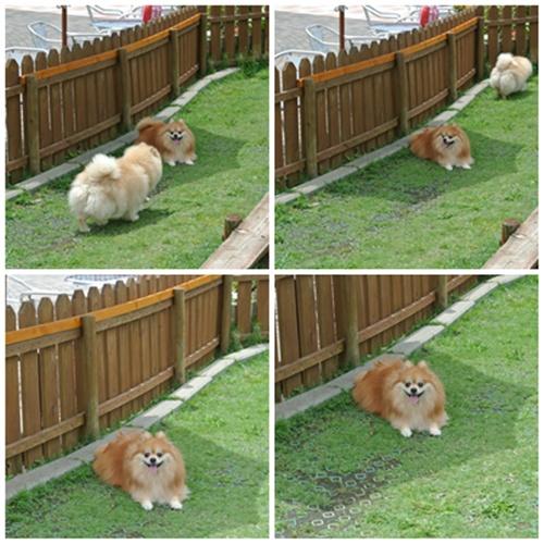 cats8_20120715195955.jpg
