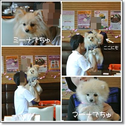 cats8_20121014125340.jpg