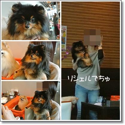 cats9_20121014125339.jpg