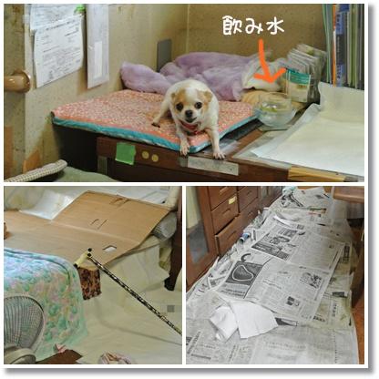 cats_20121022214015.jpg