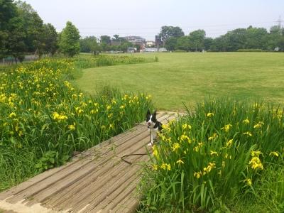 大きな芝生