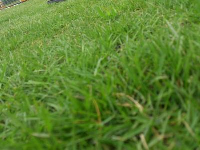 ふっかふかの芝生