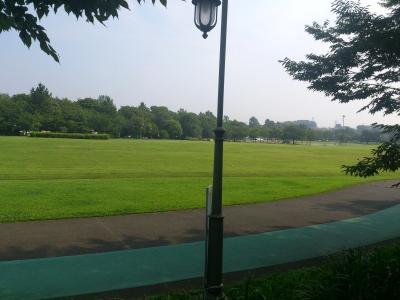 暑そうな公園の芝生