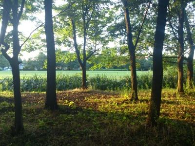 木陰から暑そうな芝生を撮ってみた