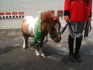 京都競馬場のポニー