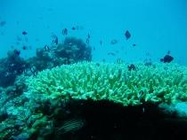 タイ タオ島 ダイビング 魚 サンゴ