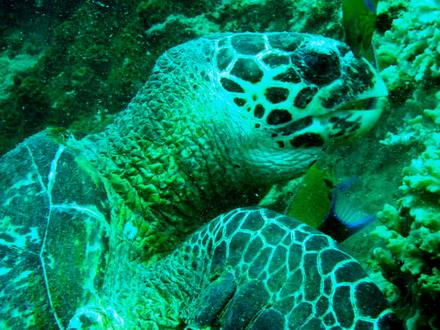 タイ タオ島 ダイビング タイマイ