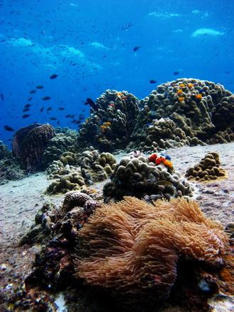タイ タオ島 ダイビング 水中景色 ツインズ