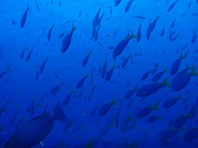 タイ タオ島 ダイビング ユメウメイロ